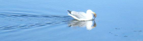 seagull-away