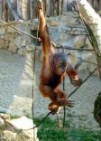 prague zoo 3