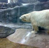 prague zoo 4