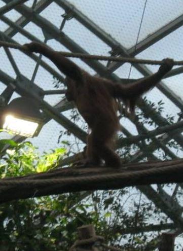 prague zoo b