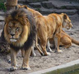 amsterdam zoo 1