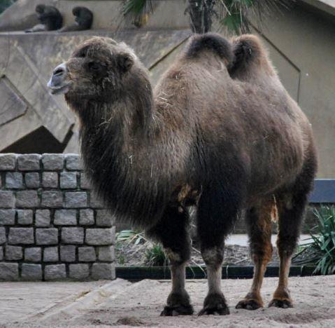 amsterdam zoo 2