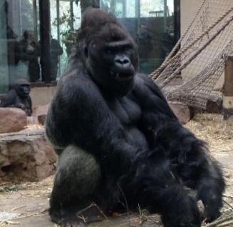 amsterdam zoo 4