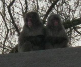 amsterdam zoo 7